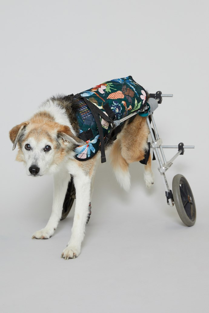 "40 cm 'Green Fingers' Dog Coat, $39 from [Gorman x PetRescue](https://www.gormanshop.com.au/shop/pet-rescue-x-gorman/40cm-green-fingers-dog-coat.html|target=""_blank""