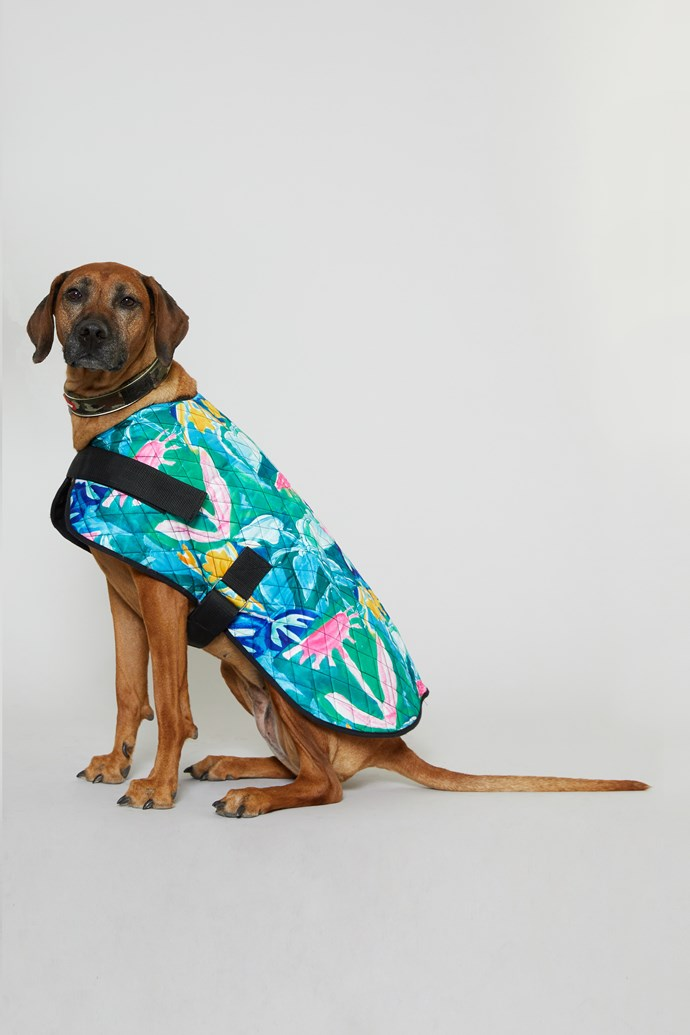"50 cm 'Neighbours Garden' Dog Coat, $49 from [Gorman x PetRescue](https://www.gormanshop.com.au/50cm-neighbours-garden-dog-coat.html|target=""_blank""