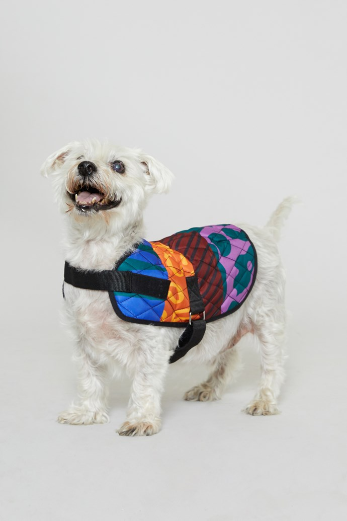 "30 cm 'Walk It' Dog Coat, $39 from [Gorman x PetRescue](https://www.gormanshop.com.au/shop/pet-rescue-x-gorman/30cm-walk-it-dog-coat.html|target=""_blank""