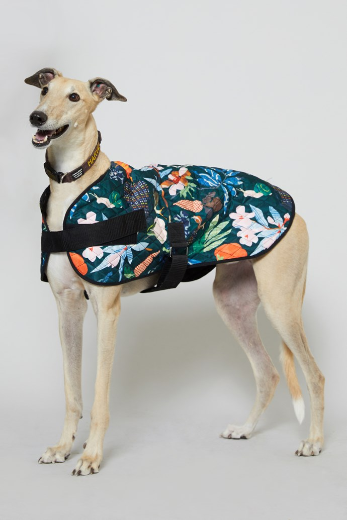 "50 cm 'Green Fingers' Dog Coat, $49 from [Gorman x PetRescue](https://www.gormanshop.com.au/shop/pet-rescue-x-gorman/50cm-green-fingers-dog-coat.html|target=""_blank""