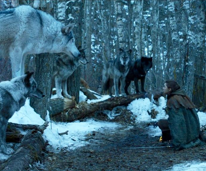 ***What happened to Nymeria?***<br><br> While on her way back to Winterfell, Arya encounters her old direwolf, Nymeria, leading a huge pack of wolves. Fans speculated that the two would eventually be reunited for good or that Nymeria would be instrumental in the Battle of Winterfell… but we never see her again.