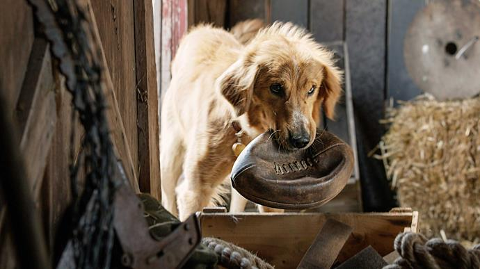 ***A Dog's Purpose* (30/06/2019)** <br><br> A dog looks to discover his purpose in life over the course of several lifetimes and owners.