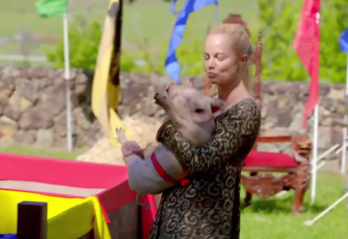 "**7. The 'Henry VIII Pig-Wrangling' group date from episode three of Matty J's season of** ***The Bachelor*** **Australia**<br><br>  Although it may have seemed like some Tudor fun-and-games to begin with, Matty J's medieval pig-wrangling challenge drew significant backlash from animal rights activist groups.<br><br>  The game, which saw the contestants madly chasing and catching piglets in a small enclosure before putting them into an even smaller enclosure, apparently did not have RSPCA approval, despite producers' [alleged claims](https://www.dailytelegraph.com.au/entertainment/sydney-confidential/the-bachelor-producers-defend-pig-group-challenge-after-social-media-backlash/news-story/de597be9dc1af1c8c7853957ad9c8452|target=""_blank""