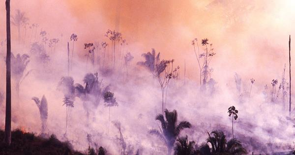 Amazon Rainforest Fires: 5 Ways You Can Help | ELLE Australia
