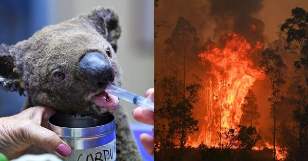 QLD & NSW Bushfires: How You Can Help The Victims | ELLE Australia