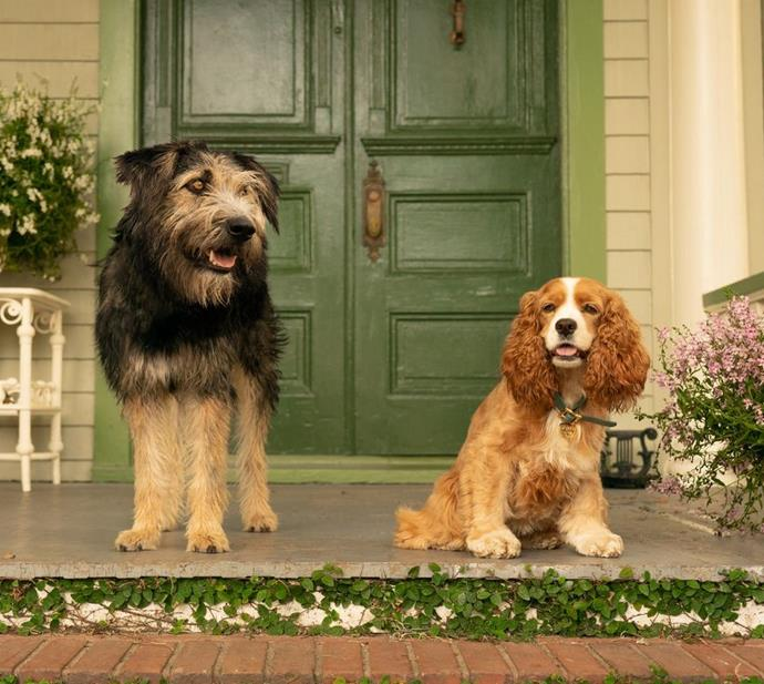 ***Lady And The Tramp*** <br><br> The live-action retelling of the beloved 1955 puppy romance flick.