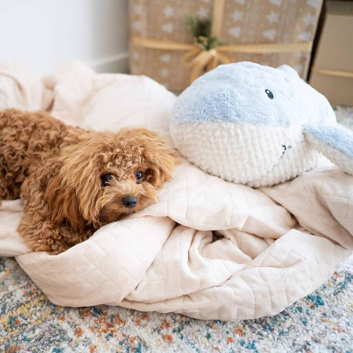 "**The Companion** <br><br> While we know that sleeping next to your [furry companion promotes a better nights sleep](https://www.elle.com.au/health-fitness/women-sleep-better-dogs-study-22753|target=""_blank""), why not share the love. The Marley blanket means that both you and your pet can both enjoy the blissful slumber of each other's company. <br><br> *Marley Weighted Blanket, $79 at [Neptune Blanket](https://www.neptuneblanket.com.au/products/weighted-blankets-for-dogs-and-cats?variant=29418628284460&currency=AUD&gclid=Cj0KCQjw4dr0BRCxARIsAKUNjWQYB-7BELlIVyrxre0xbAVk-lBhXo40BB-j264RZ0p66PTbrRZaB6YaAugVEALw_wcB