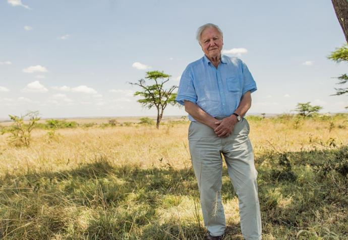 ***David Attenborough: A Life on Our Planet* (04/10/20)** <br><br> The king of narrating is back in a much more personal capacity. Recounting his life, and the evolutionary history of life on Earth, Sir David Attenborough grieves for lost nature and inspires us to do better for the planet.