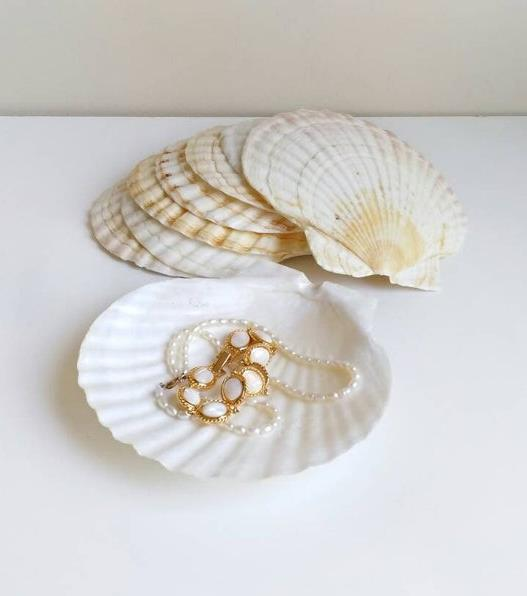 "Clam shell jewellery dish, available in small and large by ArcticartShop, $9.70 to $11.86 at [Etsy](https://www.etsy.com/au/listing/745369060/large-shells-clam-shell-jewelry-dish-big|target=""_blank""