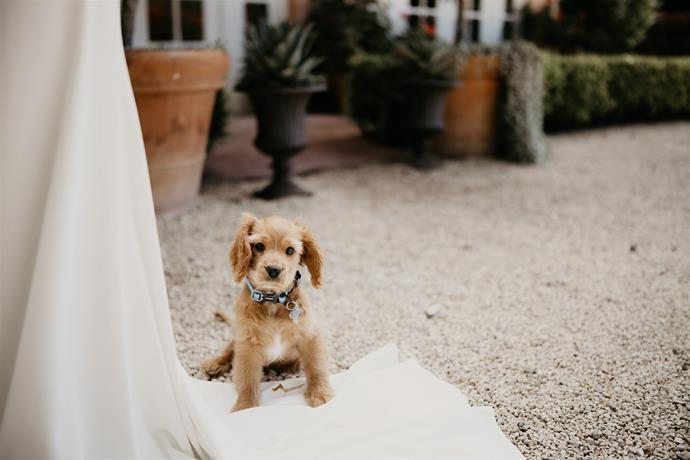 """""""Chase stole the show!""""  [Photography: Hungry Hearts Co](https://hungryheartsco.com/
