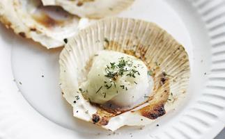 scallops with fennel béchamel
