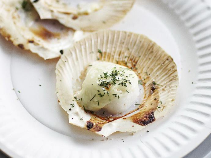 "**[Scallops with fennel béchamel](https://www.womensweeklyfood.com.au/recipes/scallops-with-fennel-bechamel-4165|target=""_blank"")**"