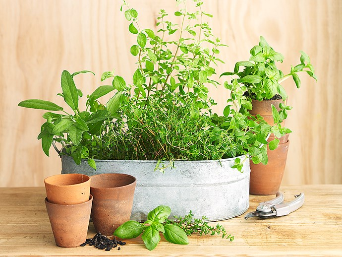 10 types of potted herbs and how to grow them