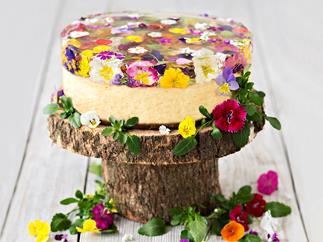 Baked ricotta cake with spring-flower jelly