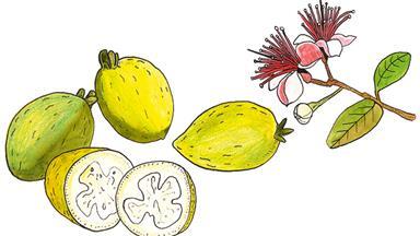 5 ideas for feijoas