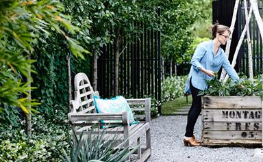 What to plant and harvest in the garden this summer