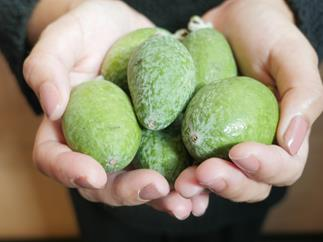 Why we love feijoas