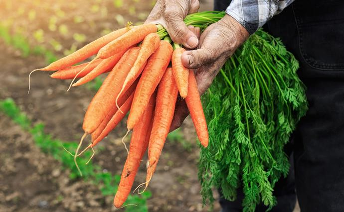 Your autumn garden guide to planting and harvesting vegetables