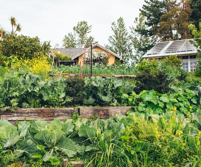 Ben and Lynda built a terraced garden to provide easy access to vegetables such as broccoli, cabbage and kale.