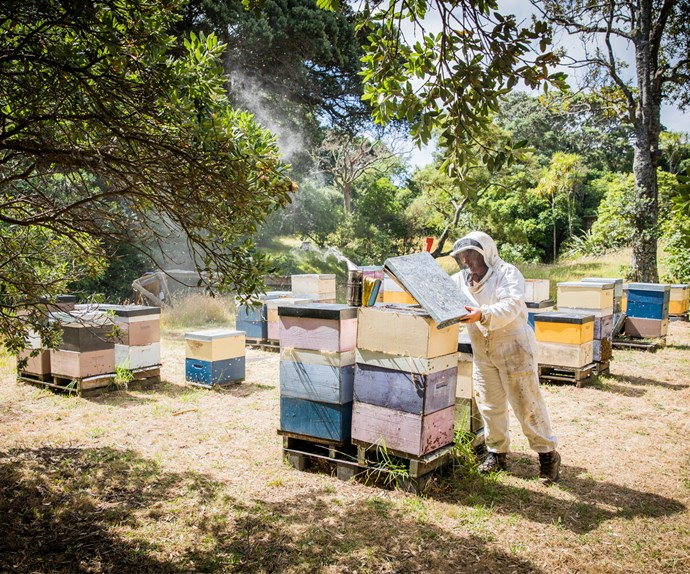 Karlene in action at a coastal property near Auckland's Bethells Beach. The bees here forage on 300-year-old pohutukawa trees and produce Earthbound's pohutukawa honey.