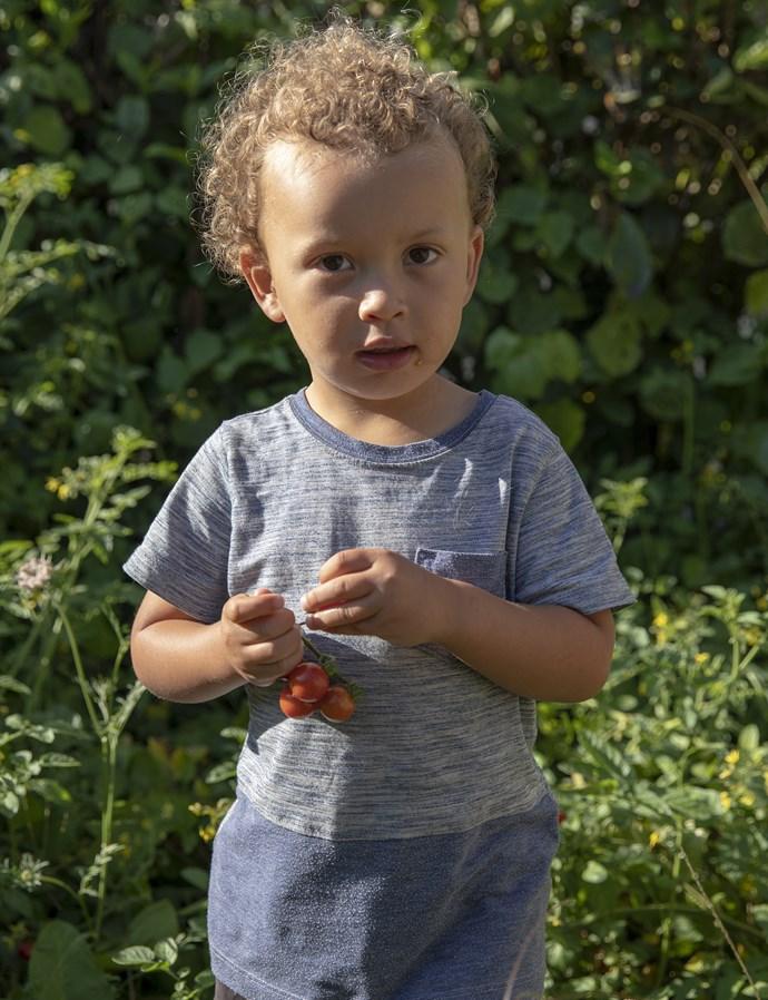 *Grandson Kian picks and eats vine-ripened tomatoes from the garden*