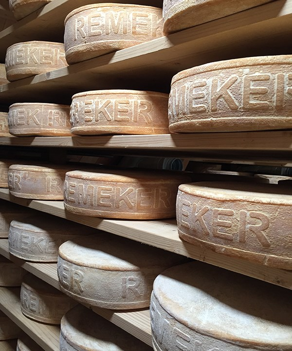 Wheels of Remeker cheese ageing