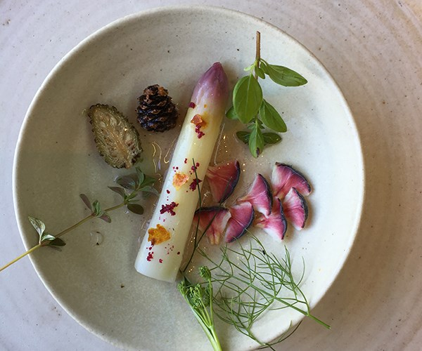 Pickled white asparagus and pine cone