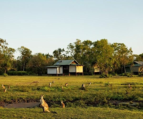 Wallabies graze outside bungalows at Bamarru Plains