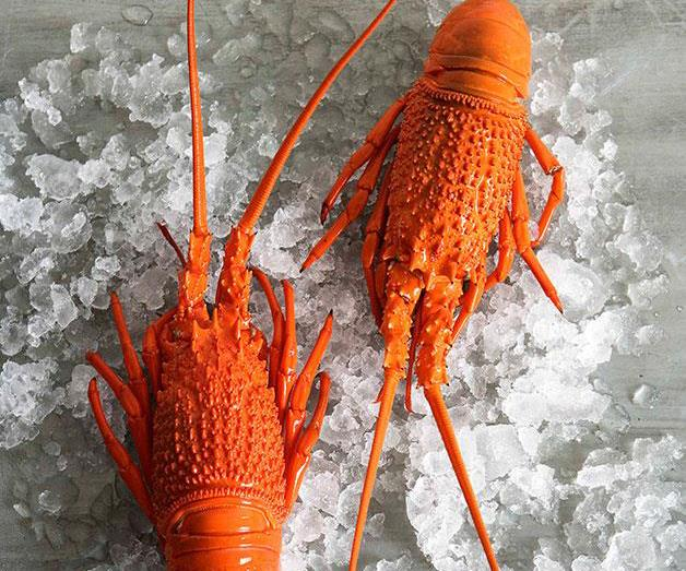 **[How to prepare fresh lobster](https://www.gourmettraveller.com.au/recipes/browse-all/preparing-a-fresh-lobster-14076)**