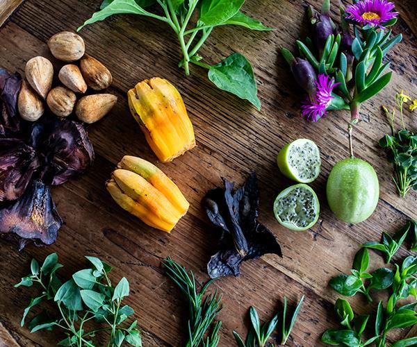 Unusual food plants at Harvest.
