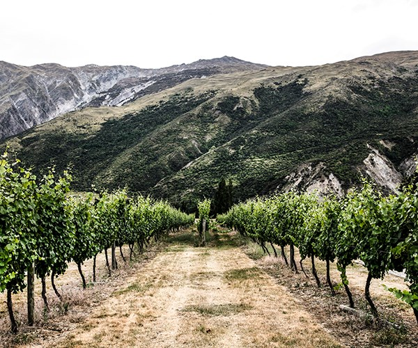 Vines at Kinross Cottages