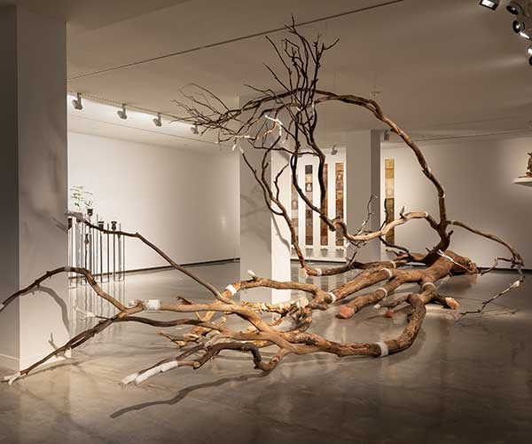 Janet Laurence, installation view, *Janet Laurence: After Nature*, Museum of Contemporary Art Australia, Sydney, 2019, image courtesy the Museum of Contemporary Art Australia © the artist. (Photograph: Jacquie Manning)
