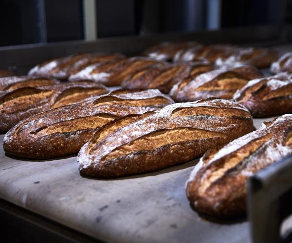 *Iggy's signature sourdough loaves.*