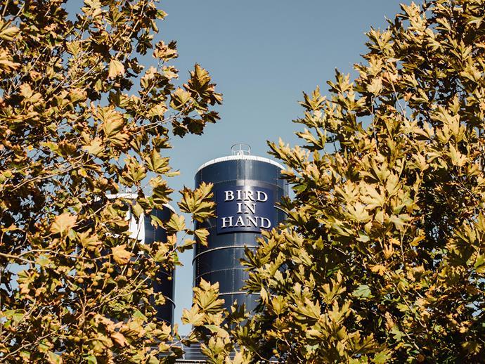 Bird in Hand's vineyard, Adelaide Hills, SA.