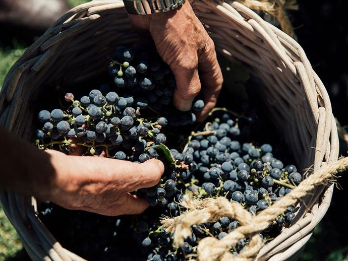 Grapes from the vineyard.