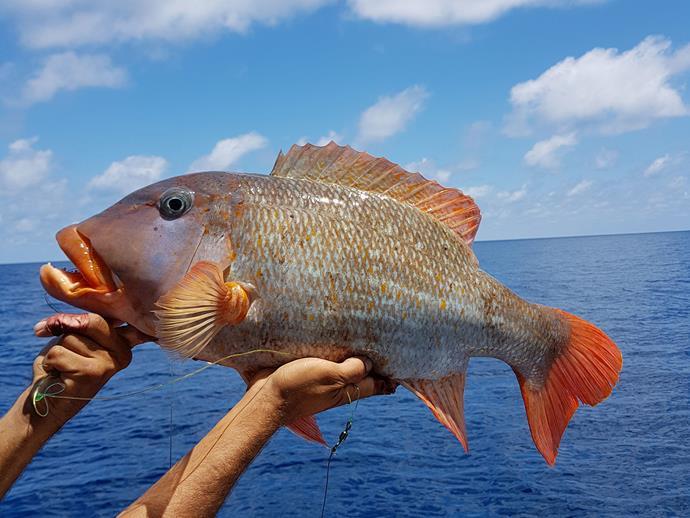 A fresh catch.