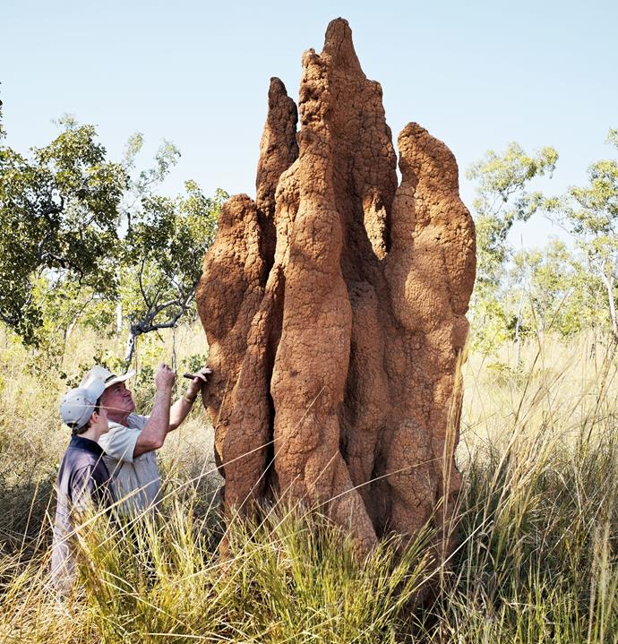 **Lord and guest Harry Anderson inspect a termite mound**