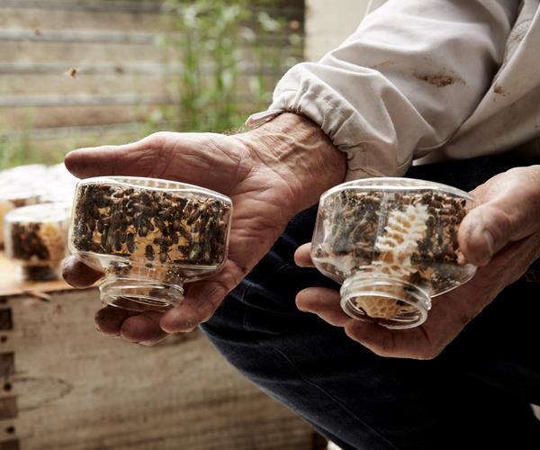 Jars of Maya Sunny Honey.