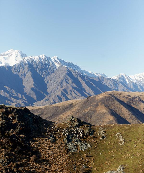 The snowy peaks of the Kaikoura Ranges.