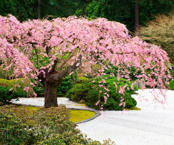 Portland Japanese Garden.