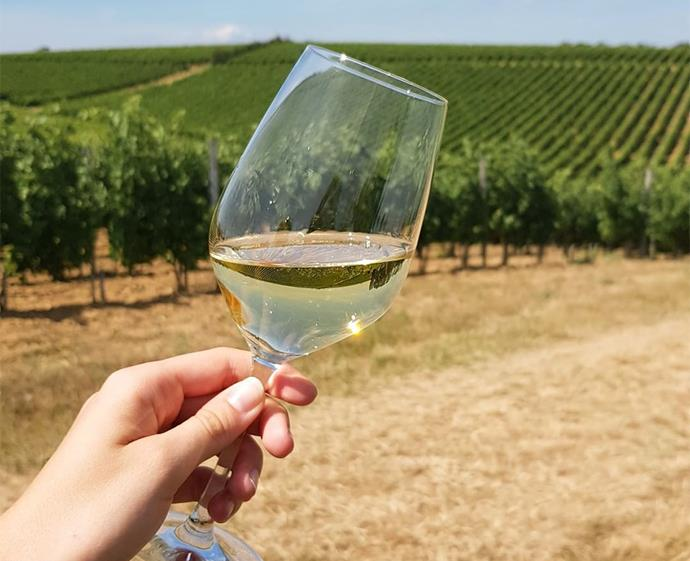 "Founded in 1808, the family-run Maison M. Chapoutier winery produces organic and biodynamic wines − world-renowned for their exquisite taste and quality. *Photo: [@m_chapoutier](https://www.instagram.com/m_chapoutier/|target=""_blank""