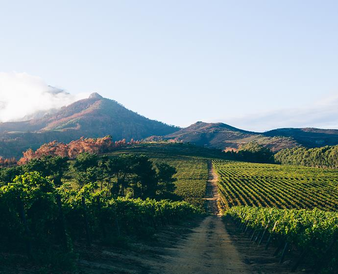 The picturesque Stellenbosch wine region is a must-see for wine connoisseurs. *Photo: Getty*