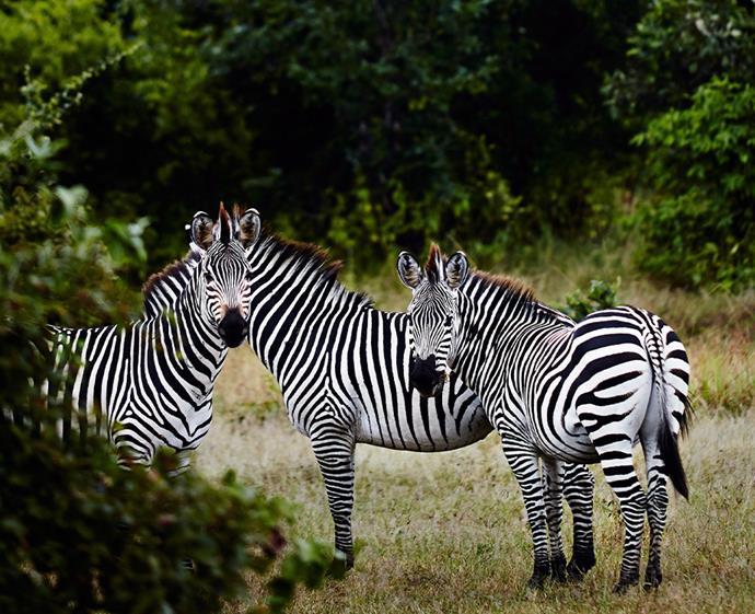 Experience the action with an APT safari tour. *Photo: Sharyn Cairns / Bauersyndication.com.au*
