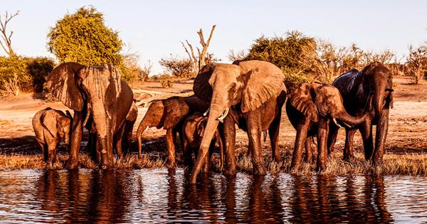 Experience the best of Africa | Gourmet Traveller