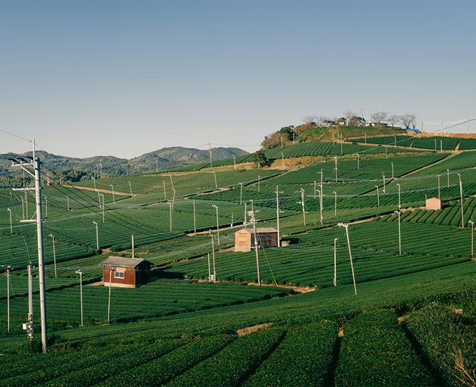 The picturesque Yame Central Tea Gardens. *Photo: Joachim Ducos*