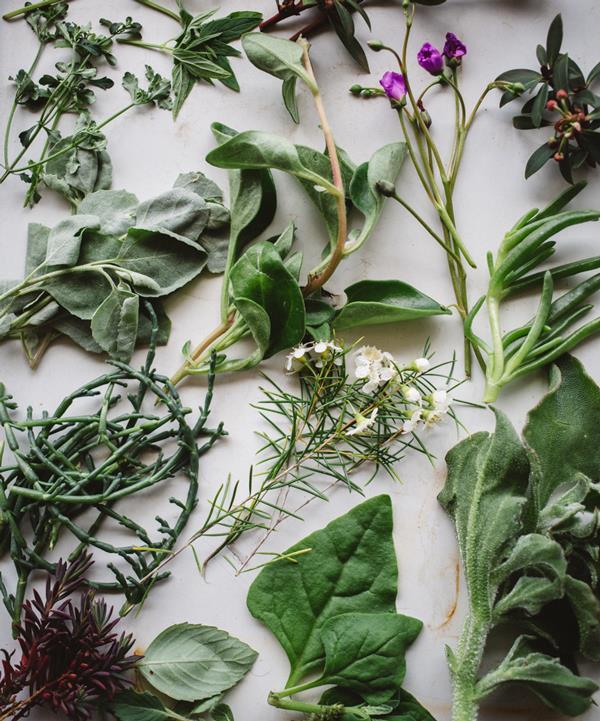 Edible native Australian plants.