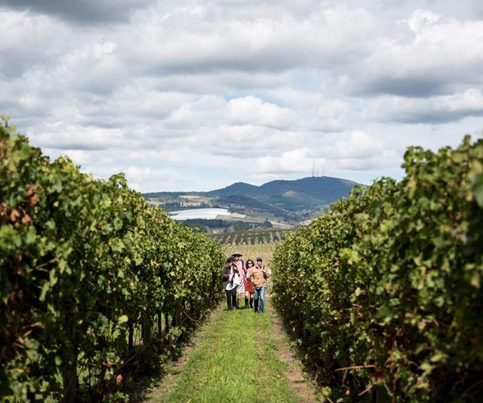 Exploring vineyard during Orange F.O.O.D week.