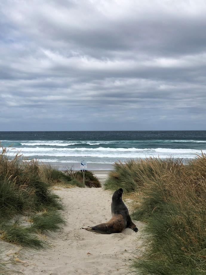 A seal delighting in some beach time at Kaimata on the Otago Peninsula.