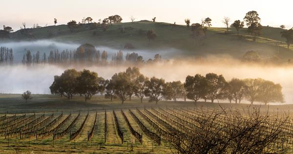 Your travel guide to Canberra's wine region