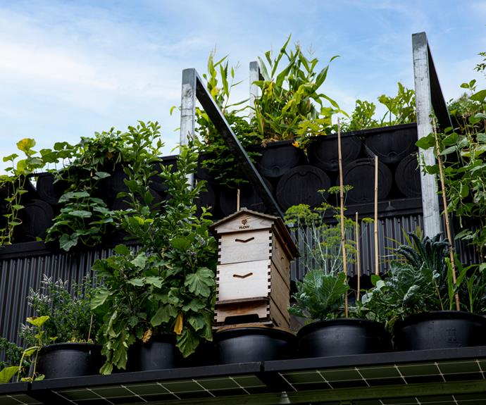 An onsite urban beehive.